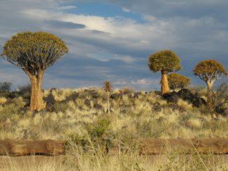 Kalahari viertgrößten Wüste der Welt