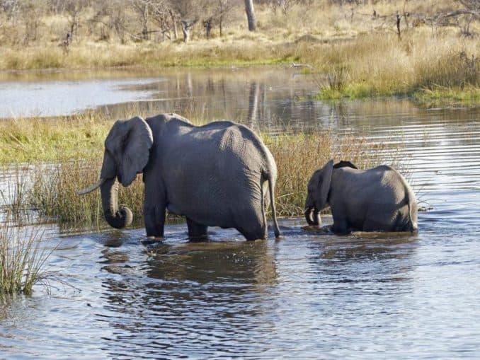 Makgadikgadi-Pans-Nationalpark